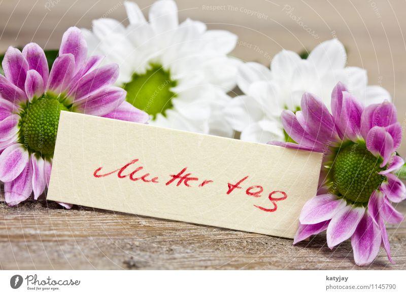 Muttertag rot Blume Freude Liebe Blüte Feste & Feiern Familie & Verwandtschaft Dekoration & Verzierung Schilder & Markierungen Geburtstag Blühend Geschenk
