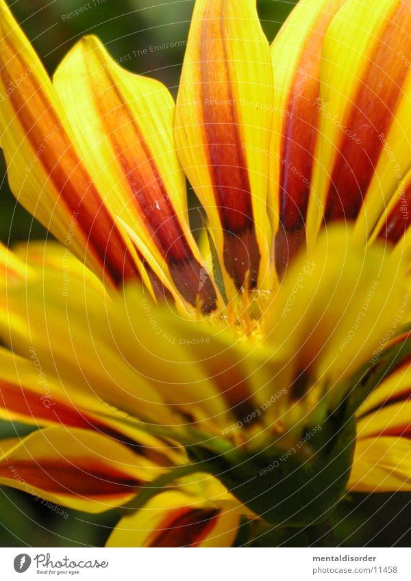 Gartenblume4 *Serie grün rot gelb Blüte orange