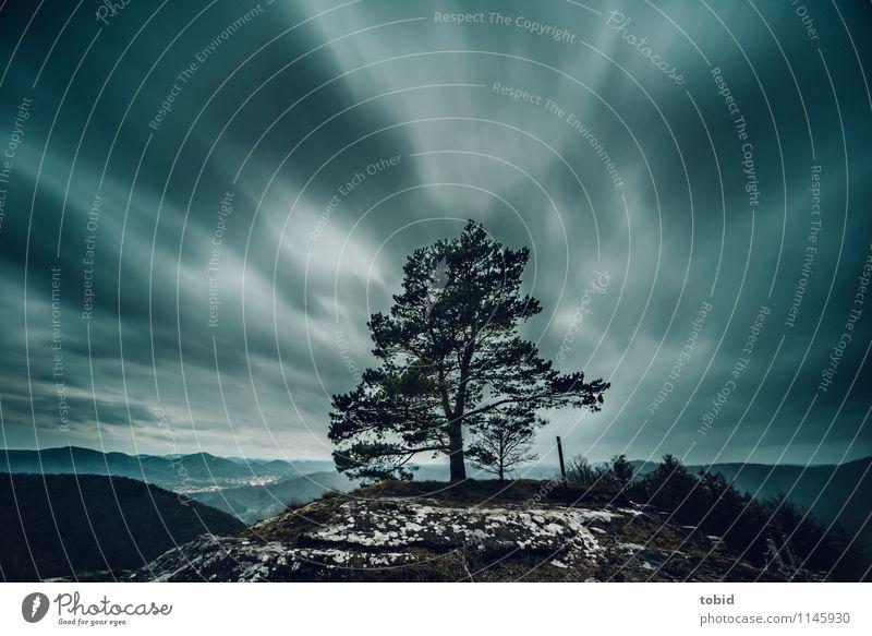Wind Natur Landschaft Pflanze Urelemente Himmel Wolken Horizont schlechtes Wetter Baum Gras Sträucher Moos Wald Hügel Bewegung bedrohlich dunkel Ferne
