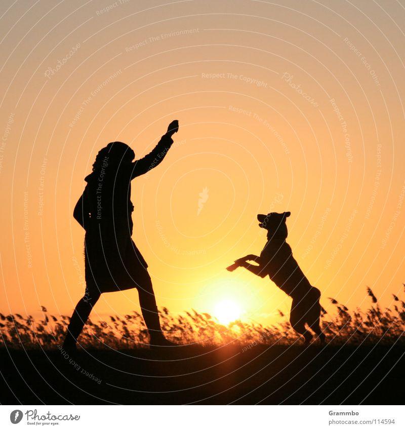 Hopp! Hund Frau Abendsonne Sonnenuntergang Deich Usedom rot gelb Freude Abenddämmerung Achterwasser Lilli
