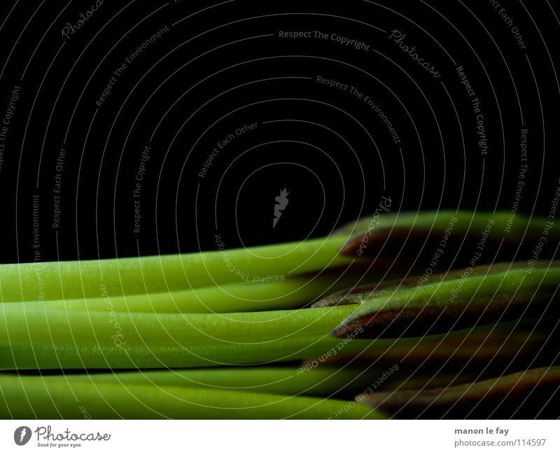 Okki grün schwarz Pflanze Blüte skurril Leben Blütenstempel Staubfäden außergewöhnlich zart Lilien halbdunkel Liliengewächse Blume Makroaufnahme Nahaufnahme