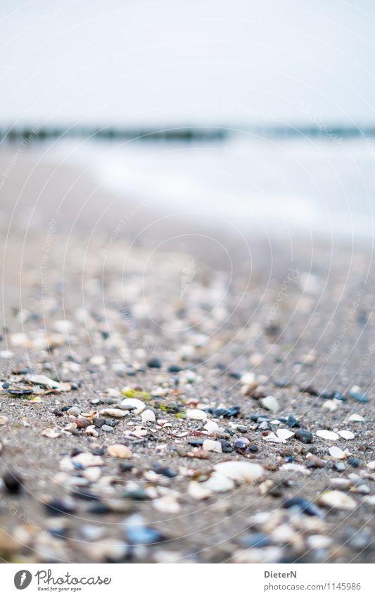 Streifen Strand Meer Landschaft Sand Wasser Horizont Ostsee Stein grau grün weiß Mecklenburg-Vorpommern Muschelschale Sandstrand Farbfoto Außenaufnahme