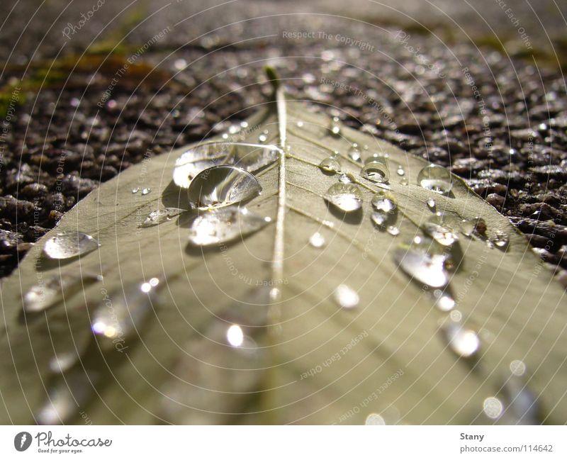 Nach dem Regen Bürgersteig grau trist frisch Wassertropfen Blatt nass Makroaufnahme Nahaufnahme Herbst Heimweg Langeweile