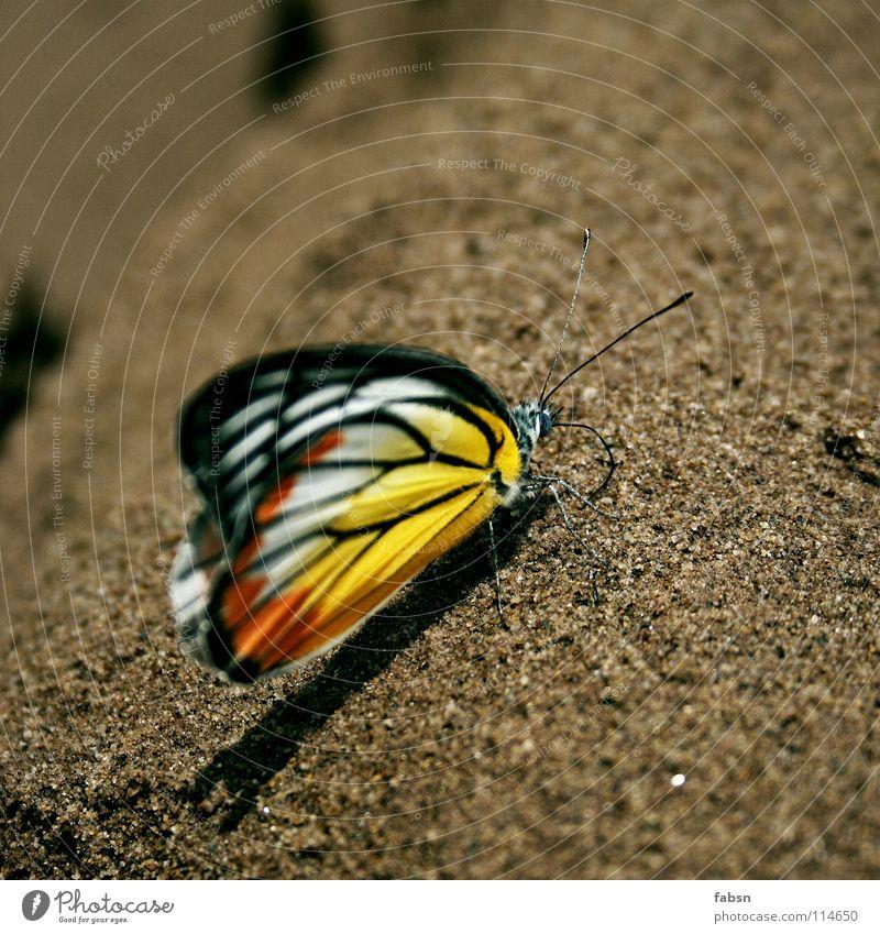 SMASHY mehrfarbig Schatten Erholung Sommer Strand Natur Tier Sand Wüste Schmetterling Flügel genießen gelb rot Fühler Asien animal coloured wings orange
