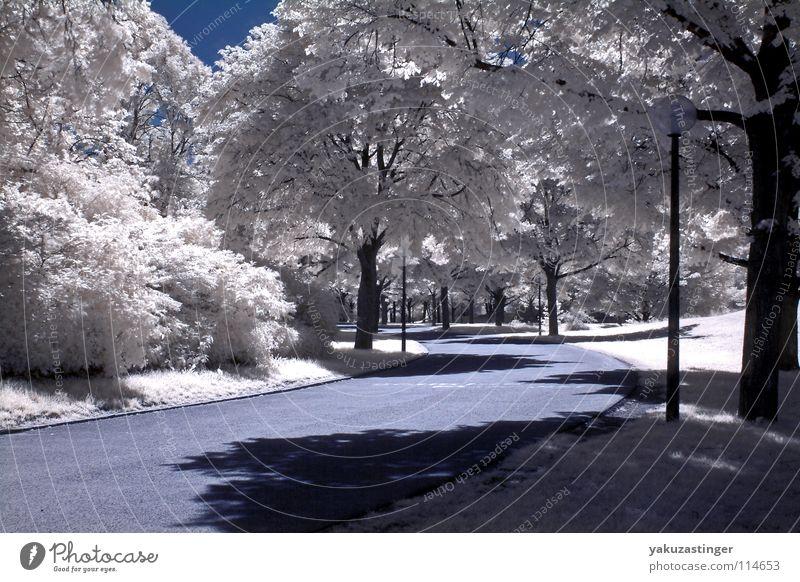 weißer Sommer 3 Baum Wiese Gras Park Rasen offen Infrarotaufnahme Farbinfrarot
