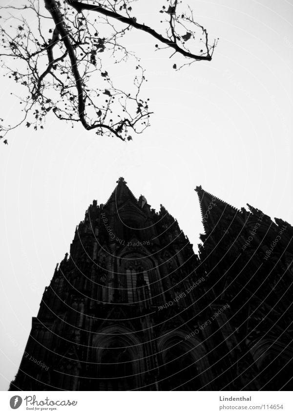 DOM Religion & Glaube Baum Geäst Köln Gotik Glocke Gotteshäuser Dom Architektur