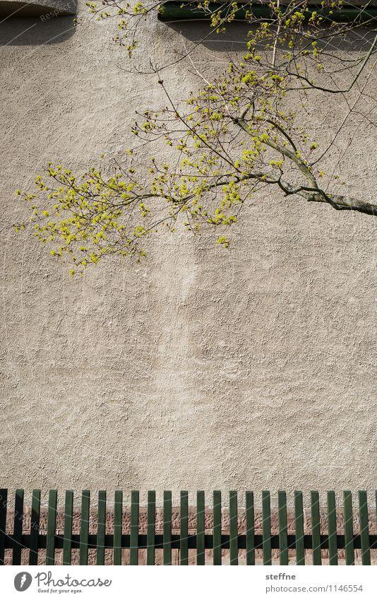Frühling in Göttingen Baum Haus außergewöhnlich Fassade Blühend Zaun