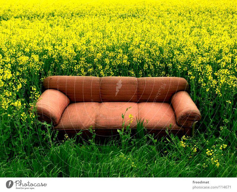 setzt euch doch Wiese Erholung Sofa Möbel deplatziert Raps Feld grün gelb ungeheuerlich leer Pflanze Sitzgelegenheit schlafen ruhen Wohnzimmer himmlisch bequem