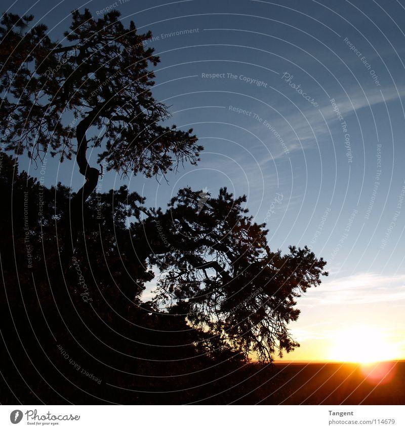 Abends am Hang Natur Himmel Baum Sonne blau schwarz Wolken dunkel Berge u. Gebirge Sträucher Schlucht Berghang Himmelskörper & Weltall Arizona