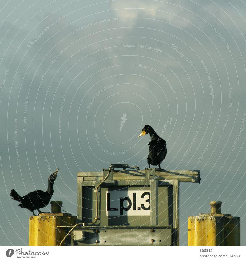 HALTS MAUL! Vogel Kormoran schwarz See Meer Bremen stehen Natur Konflikt & Streit Lebensraum 3 Freundschaft Mitarbeiter Verständnis Zusammensein Gegner 2 Dock