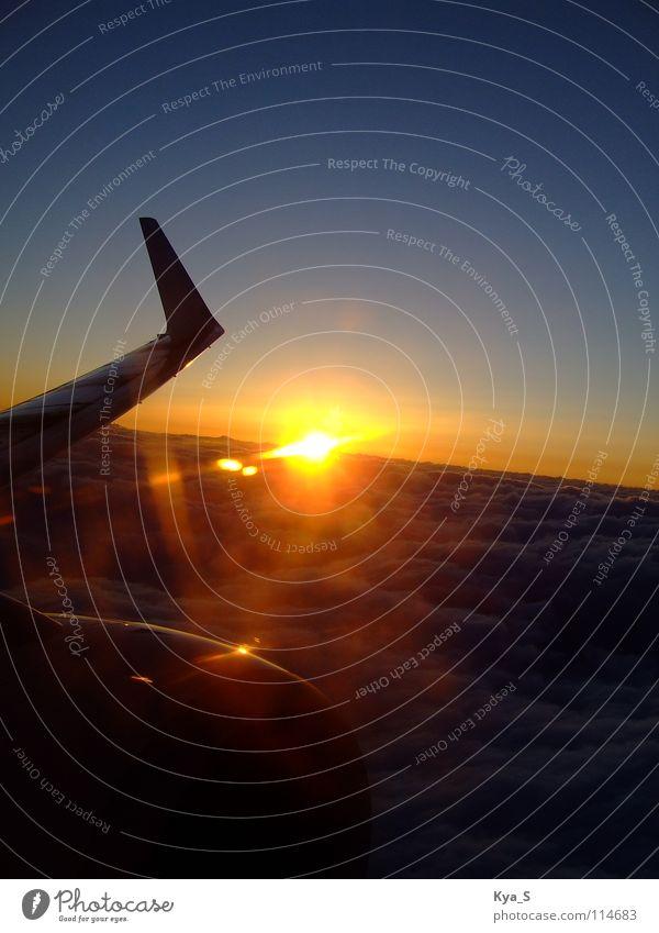Über den Wolken...ei ei ei Flugzeug Sonnenuntergang gelb blau träumen Wunsch Unendlichkeit Ferne Nacht Dämmerung Luft Luftverkehr Himmel sonne himmel Natur