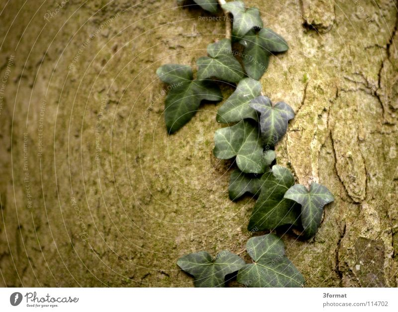 efeu Natur Baum Pflanze Winter Blatt Einsamkeit kalt dunkel Herbst Tod Blüte Garten Umwelt träumen Traurigkeit Regen