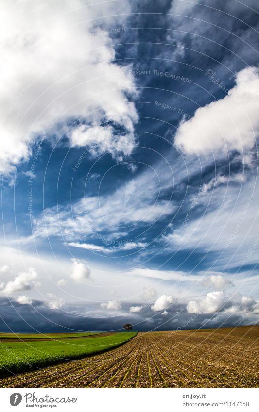 Weitblick Landwirtschaft Forstwirtschaft Umwelt Natur Landschaft Pflanze Himmel Wolken Horizont Sonnenlicht Frühling Sommer Klima Wetter Sturm Baum Aussaat