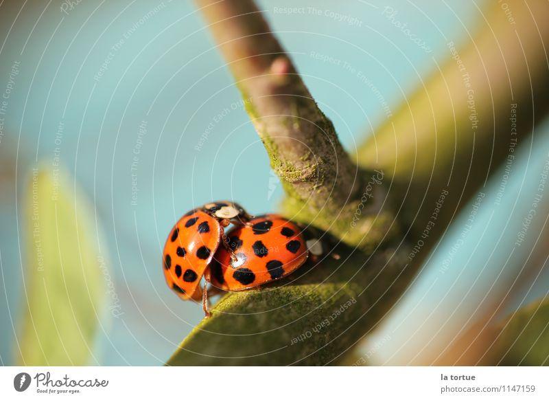 a bug's life Natur blau Sommer Sonne rot Freude Tier schwarz Umwelt Leben Gefühle Liebe Frühling natürlich Zusammensein wild