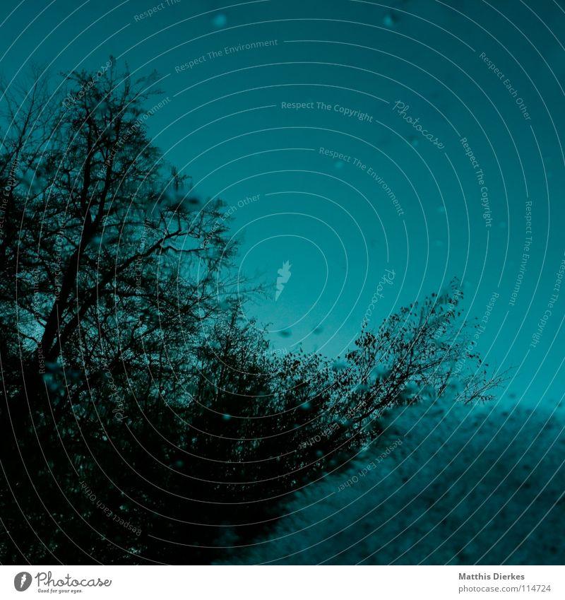 Wald Himmel blau grün Wasser Baum Wolken dunkel Traurigkeit Herbst Beleuchtung Tod Stimmung Regen Nebel Angst