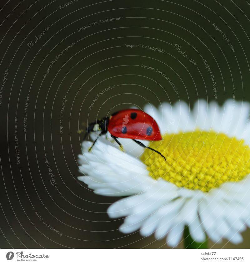 Frühlingsglück Natur Pflanze weiß Sommer Erholung Blume rot ruhig Tier Umwelt gelb Blüte Frühling Wiese Glück klein