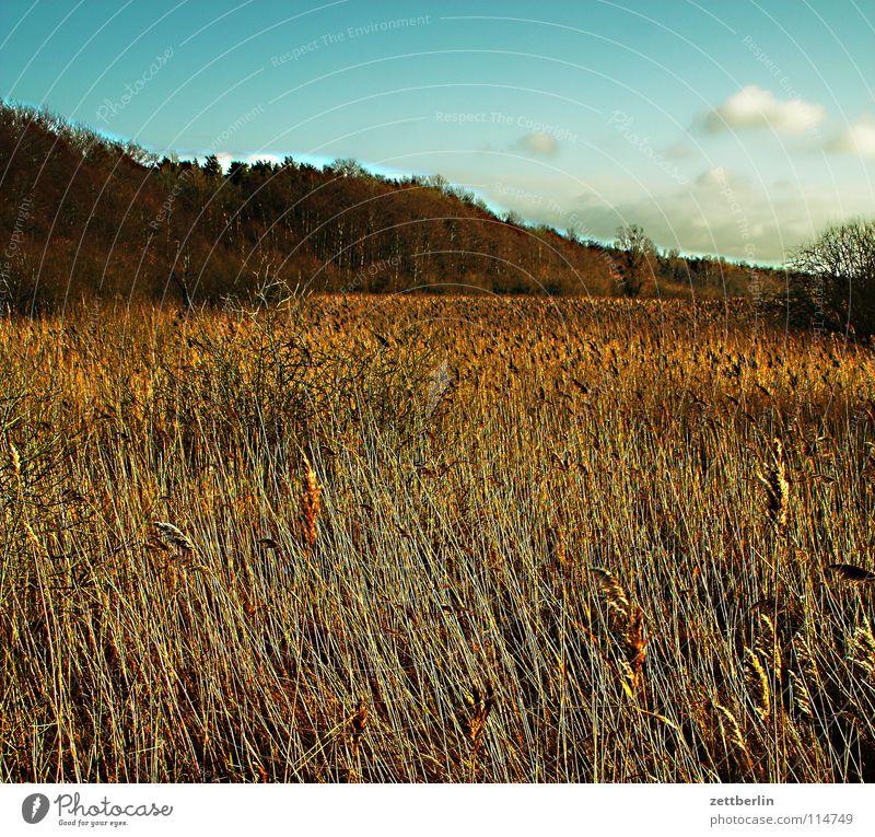 Müritz Natur Himmel Ferien & Urlaub & Reisen Wald Herbst See Küste Freizeit & Hobby Schilfrohr Umweltschutz Nationalpark Brandenburg Mecklenburg-Vorpommern