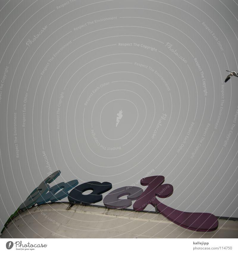 weihnachtsgans Himmel Winter Vogel Wohnung fliegen Ernährung Schriftzeichen Buchstaben Kochen & Garen & Backen Typographie Ackerbau Schweben Geruch Fett