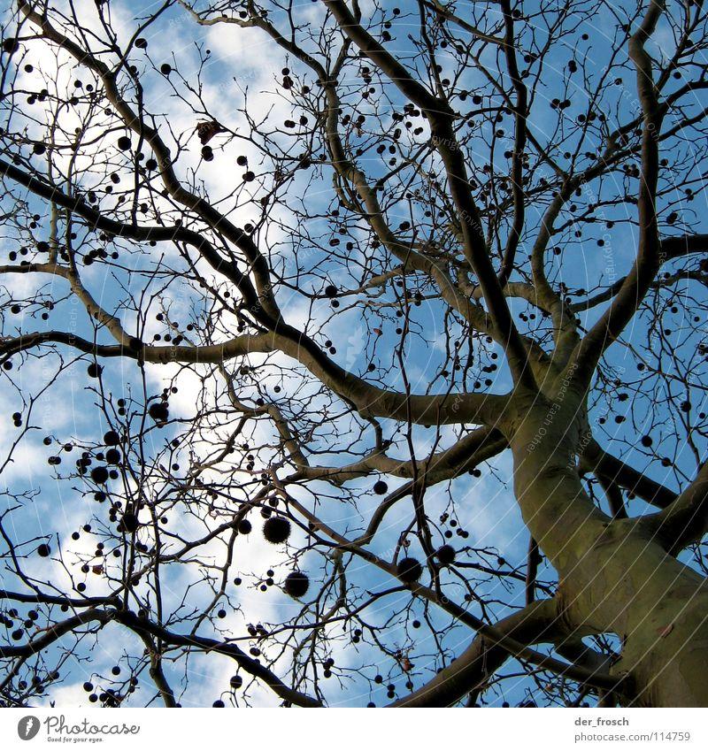 christbaumschmuck Baum Baumstamm Baumrinde Wolken braun grün Herbst Winter Himmel Kugel Ast blau keine blätter