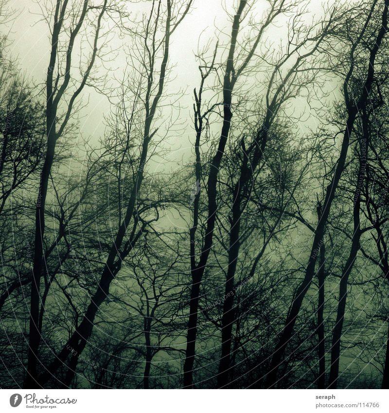 geisterwald Wald Baum Sturm Nebel Ast spukhaft Stimmung Geister u. Gespenster Spuk dunkel Pflanze geheimnisvoll Natur Laubwald trüb Einsamkeit Märchen trist
