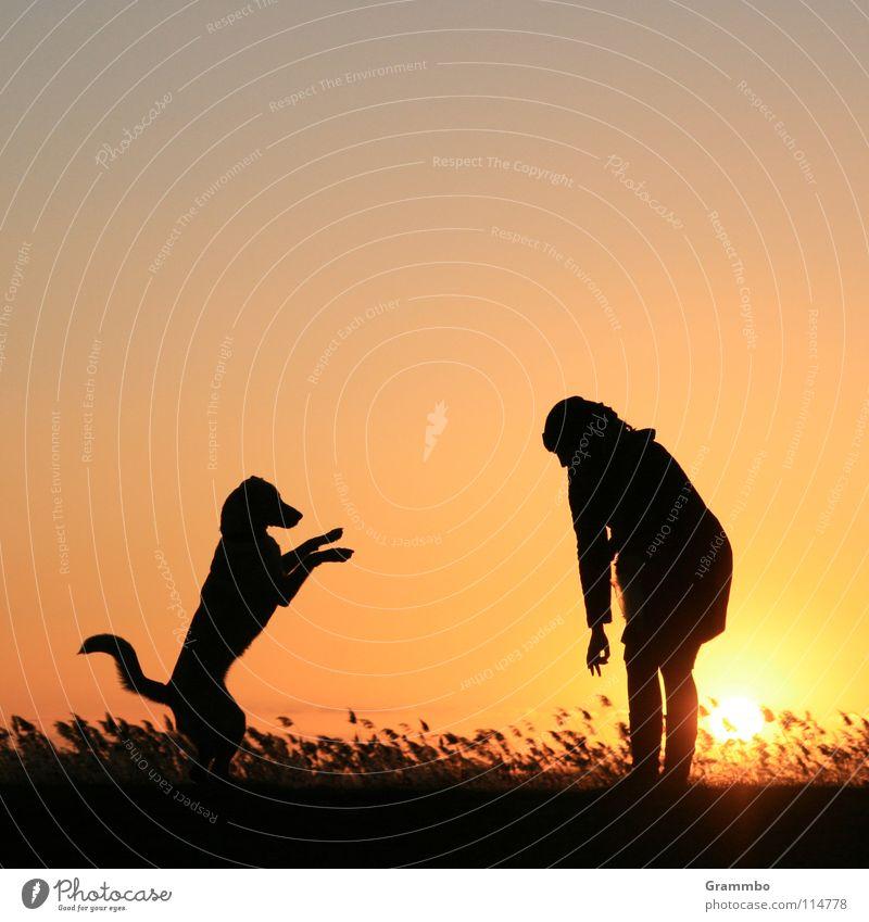 Erdmännchen Frau Sonnenuntergang Abend Usedom Deich Schilfrohr Freude Abenddämmerung Achterwasser Lilli