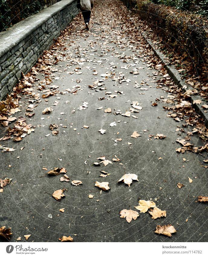 Herbstgang Blatt Jahreszeiten Fußgänger Hecke Mauer Steinmauer gehen Trauer Einsamkeit Wege & Pfade Spaziergang Traurigkeit