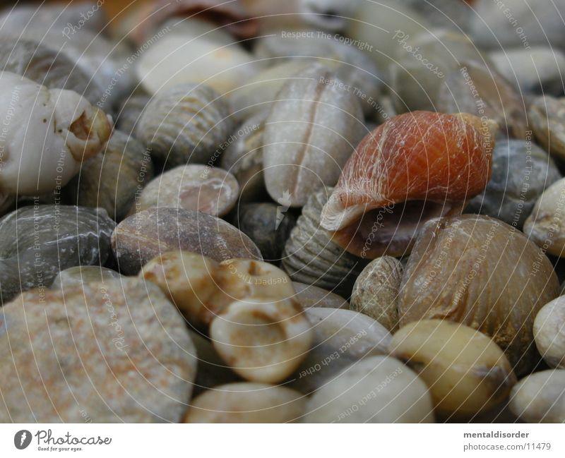 Urlaubserinnerungen alt Stein Muschel fossil