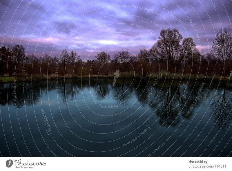 Himmel, Erde, Wasser Baum Wolken Herbst Traurigkeit Wind Wetter nass Trauer