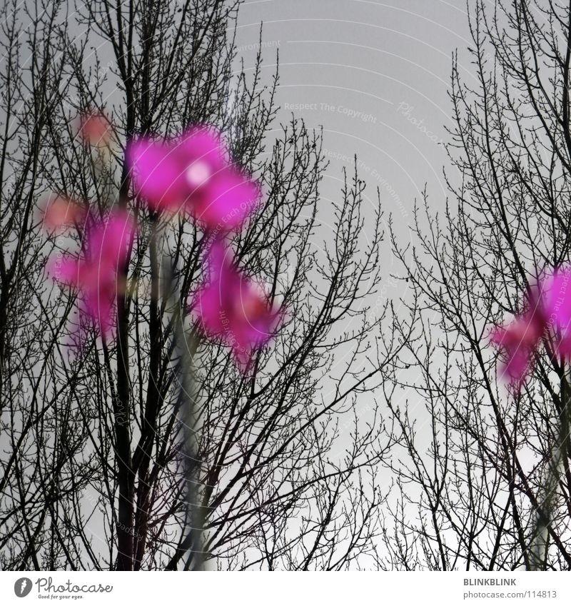 fensterbank Himmel Baum Blume Winter schwarz Fenster grau rosa Ast Aussicht Sehnsucht Blühend Baumkrone obskur Orchidee Geäst