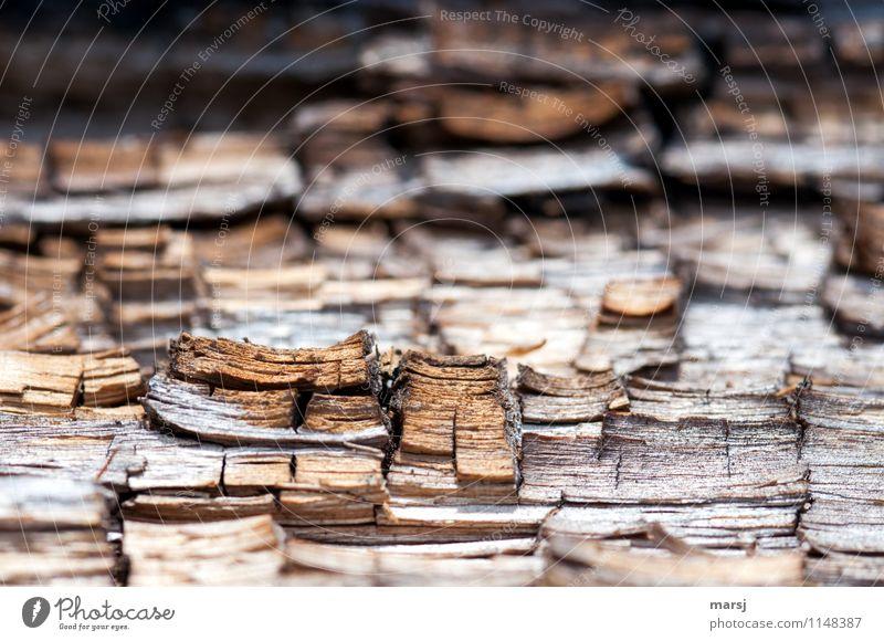 Alterungsprozess Jahresringe altes Holz außergewöhnlich authentisch eckig einfach einzigartig Natur Verfall Vergänglichkeit Zerstörung verfallen Ende