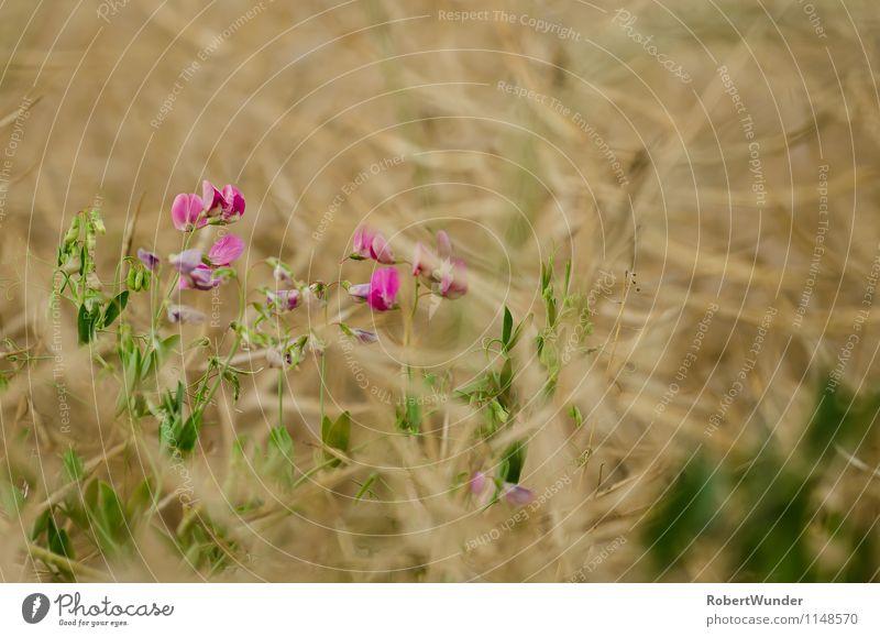 Lila Natur Pflanze schön Blume Blüte Frühling Schönes Wetter Frühlingsgefühle