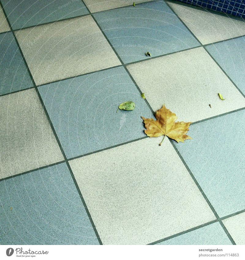 kleinkariertes blatt Raum Fliesen u. Kacheln Muster weiß-blau Quadrat Bodenbelag Durchgang Einkaufspassage Leerstand Einsamkeit Sauberkeit Blatt Herbst Winter