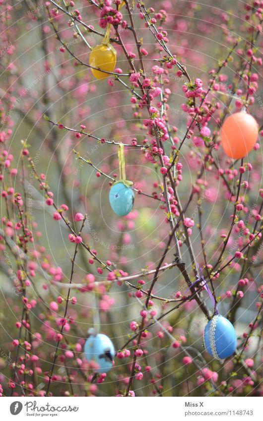 Ostern Pflanze Baum Blatt Blüte Frühling Garten Feste & Feiern Dekoration & Verzierung Sträucher Blühend Blütenknospen Ei Osterei Frühlingsfarbe