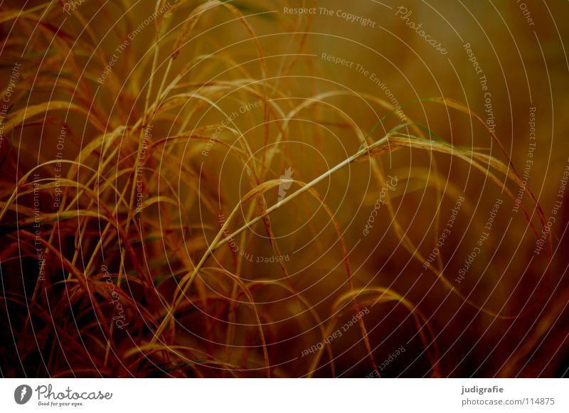Gras Strand See Licht gelb braun Stengel Halm Wildnis Umwelt Pflanze Farbe Sand Küste Wind Natur orange Linie Strukturen & Formen büschel Spitze wehen