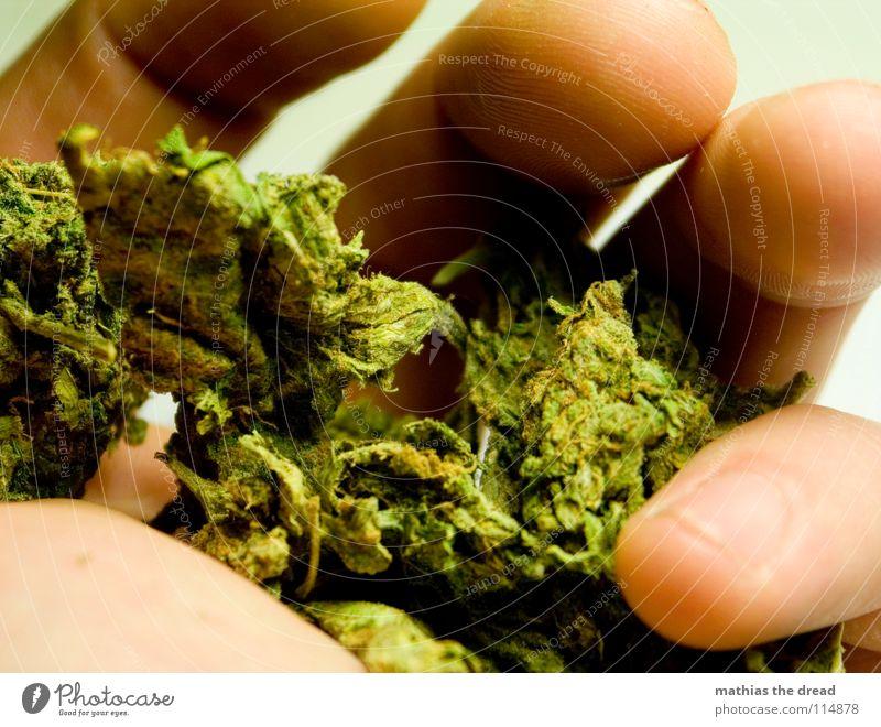 A HAND FULL OF HOPE groß Hand Finger Fingerkuppe Fingernagel Furche Silhouette Fingerabdruck schließen behüten nehmen herb Hanf Rauschmittel leicht grün