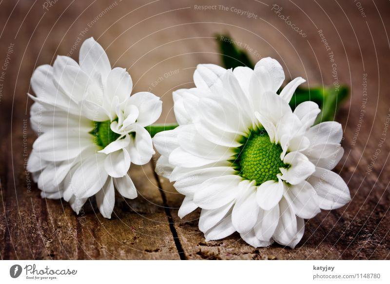 Blumen weiß Sommer Freude - ein lizenzfreies Stock Foto von Photocase