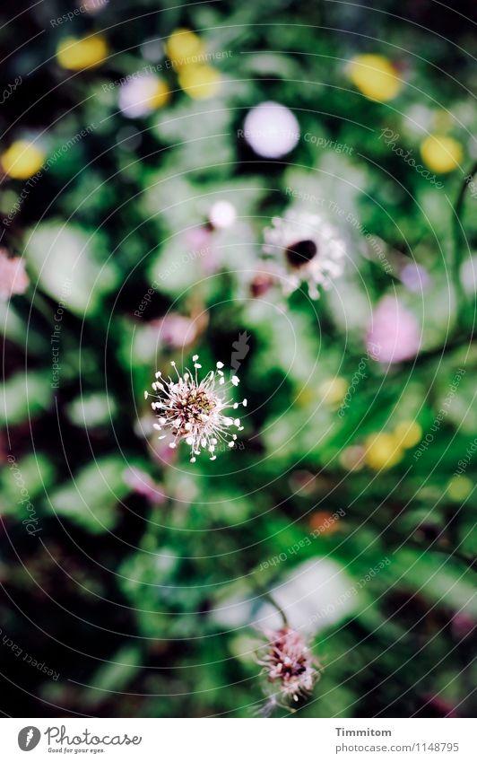 Unterwegs im Weltenraum. Umwelt Natur Pflanze Schönes Wetter Blume Blüte Garten Blühend ästhetisch gelb grün rosa schwarz Gefühle Farbfoto Außenaufnahme