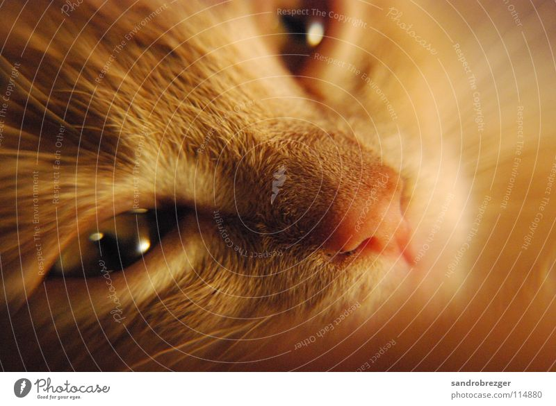 Cat Katze Wärme Auge liegen träumen Fell Müdigkeit Säugetier Hauskatze verträumt kuschlig Schnauze Katzenauge Miau Katzenauge