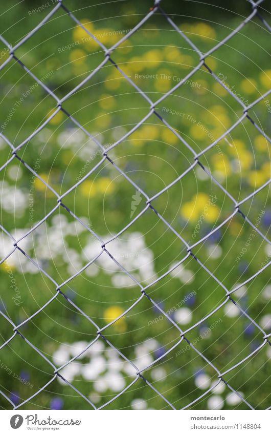 nur gucken... Umwelt Natur Pflanze Sonnenlicht Frühling Gras Grünpflanze Wildpflanze Blumenwiese Wiese Zaun Maschendrahtzaun Metall dünn authentisch