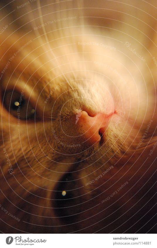 Cat 2 Katze Wärme Auge liegen niedlich Freundlichkeit Fell Müdigkeit Säugetier drehen Hauskatze verträumt kuschlig Schnauze Schnurrhaar Miau