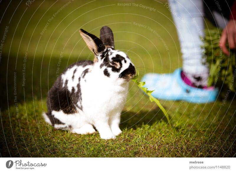 P A U S E Löwenzahn Mädchen Finger Beine Fuß 8-13 Jahre Kind Kindheit Haustier Fell Pfote Zwergkaninchen Säugetier Hasenohren Hase & Kaninchen Tier Löffel