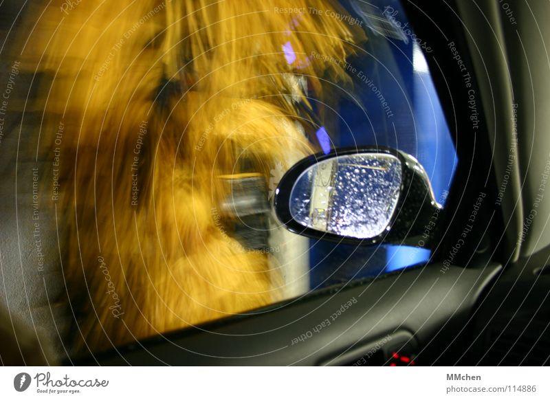 Hey, get your car washed today... Wasser blau gelb Fenster PKW warten dreckig Wassertropfen Sauberkeit Reinigen Spiegel Dienstleistungsgewerbe Langeweile drehen spritzen Schaum