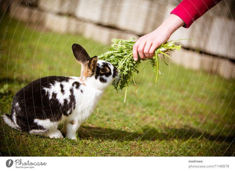 endlich Futter Mensch Kind grün weiß Hand Tier Mädchen schwarz Frühling Garten rosa Kindheit sitzen genießen Finger niedlich