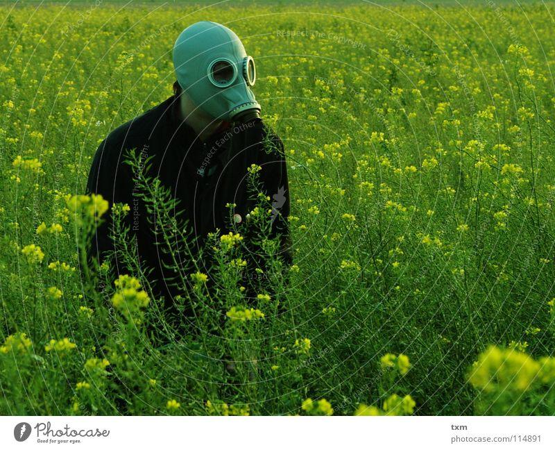 Weder Maja, noch Willi, aber auf der Honigsuche Hand grün Pflanze Blume Freude schwarz gelb Landschaft grau Feld Angst Arme gefährlich planen bedrohlich Maske