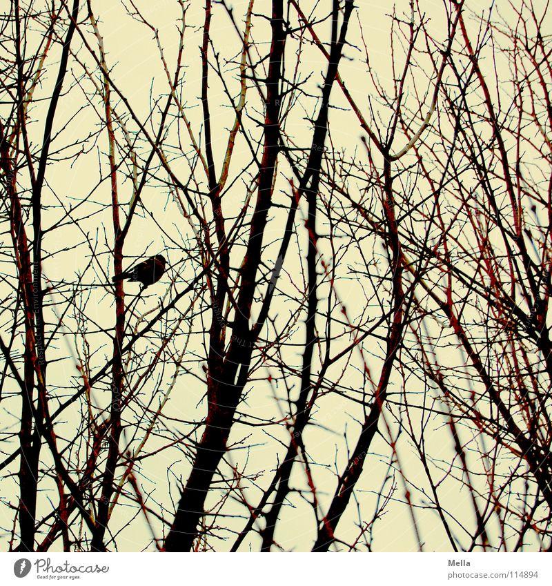 Meisenwinter Vogel Gezwitscher Sträucher Baum Unterholz Geäst Blatt laublos leer kalt Winter Herbst Einsamkeit Nahrungssuche Futter überwintern Überleben hocken