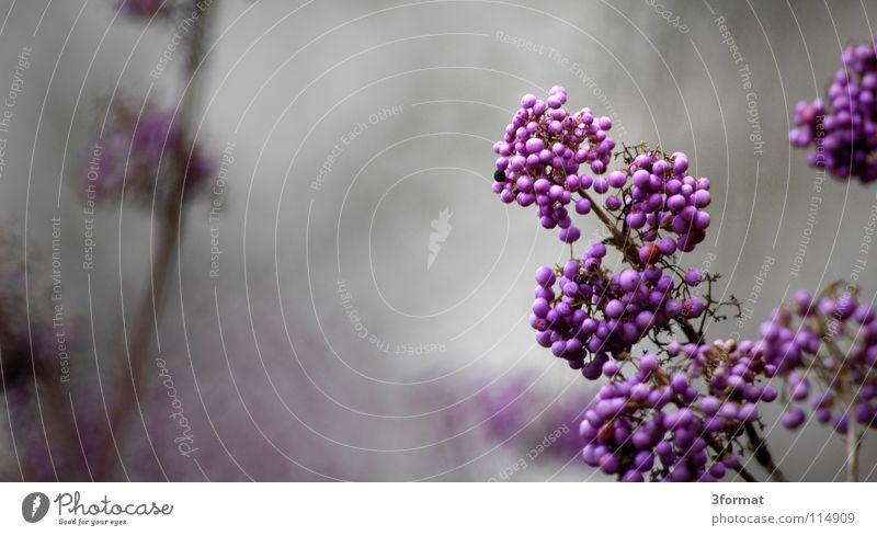 strauch Natur schön Baum Pflanze Winter Einsamkeit dunkel kalt Herbst Blüte Garten träumen Traurigkeit Park Regen Nebel