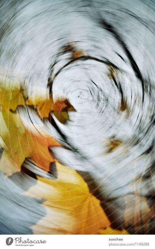intermezzo Himmel Blatt Herbst Wetter Wind Ast Jahreszeiten Sturm rotieren Drehung Wasserwirbel Sog