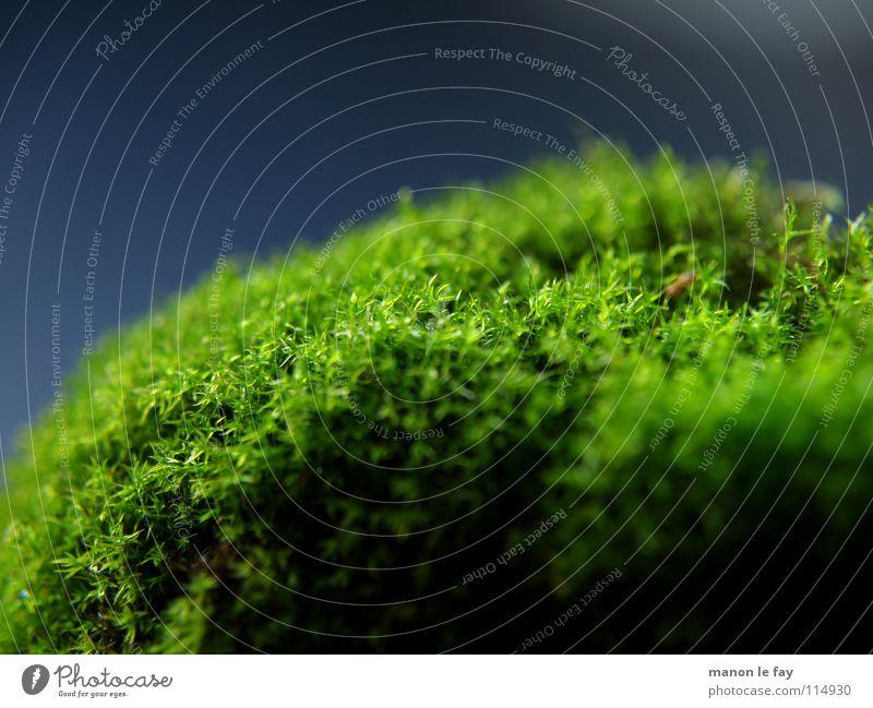 Grüner Kopf schwarz grün nah weich Unschärfe Herbst Hintergrundbild Nacht glänzend Teppich Moosteppich Makroaufnahme Nahaufnahme blau Natur
