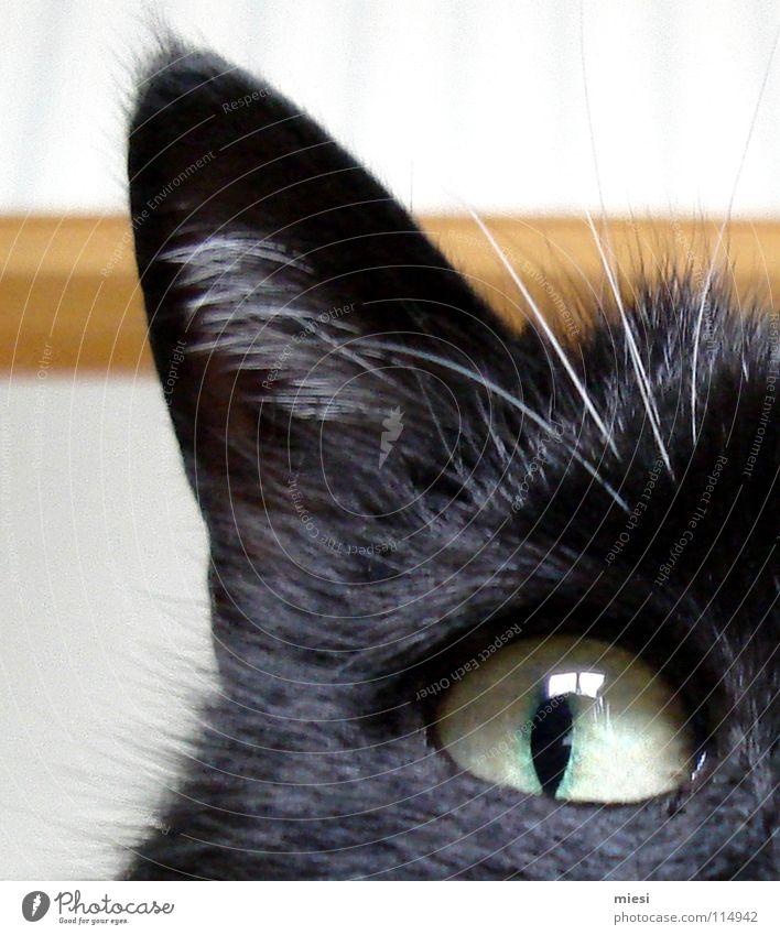 Mieze Katze Tier schwarz Auge beobachten Ohr Fell Wachsamkeit böse Gesichtsausdruck Säugetier kuschlig Hauskatze Anschnitt Pupille Katzenauge