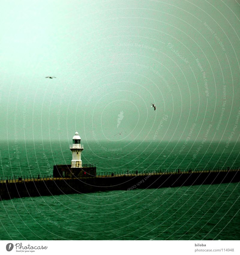 Leuchtturm Orientierung begleiten Begleiter sozial gehen England Nebel Möwe Meer grün dunkel Strahlung Horizont ungewiss Fernweh Trauer führen Richtung